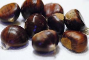 chestnut-314244_1280